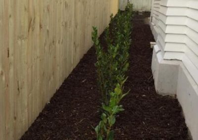 willow-landscapes-character-home-bark-side-area-planting-landscaping-ready-lawn-laid-carl-gildea-christchurch